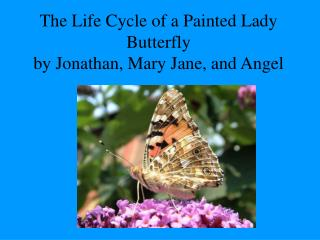 The Life Cycle of a Painted Lady Butterfly by Jonathan, Mary Jane, and Angel