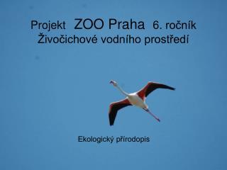 Projekt  ZOO Praha   6. ročník Živočichové vodního prostředí