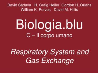 What physical factors govern respiratory gas exchange?