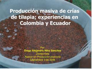 Producción masiva de crías de tilapia; experiencias en  Colombia y Ecuador