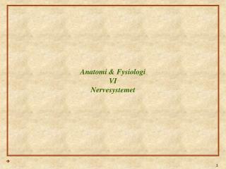 Anatomi & Fysiologi VI Nervesystemet