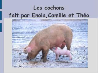 Les cochons fait par Enola,Camille et Théo
