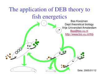 The application of DEB theory to fish energetics