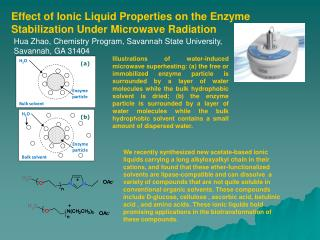 Effect of Ionic Liquid Properties on the Enzyme Stabilization Under Microwave Radiation