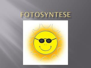 Fotosyntese