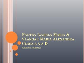 Pantea Izabela Maria &  Vlangar Maria  Alexandra Clasa a x-a D