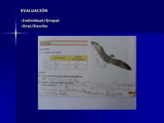 EVALUACIÓN -Individual/Grupal -Oral/Escrito