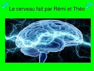 Le cerveau fait par R�mi et Th�o