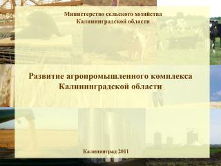 Развитие агропромышленного комплекса Калининградской области