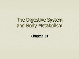 The Digestive System and Body Metabolism
