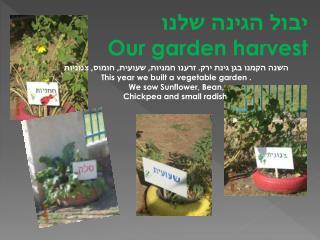יבול הגינה שלנו Our garden harvest