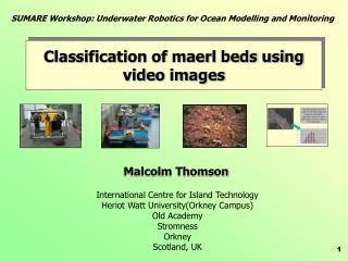Classification of maerl beds using video images