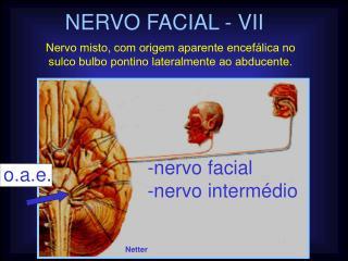 NERVO FACIAL - VII