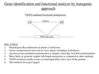 Gene identification and functional analysis by transgenic approach