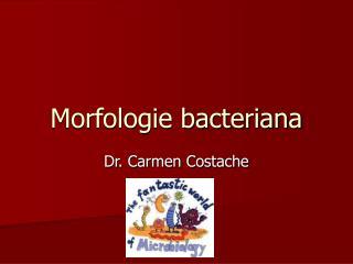 Morfologie bacteriana