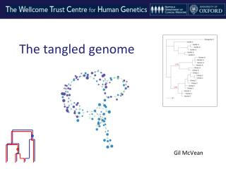 The tangled genome