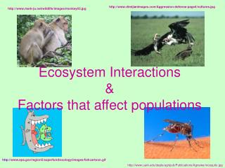 Ecosystem Interactions & Factors that affect populations