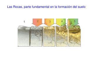 Las Rocas, parte fundamental en la formación del suelo