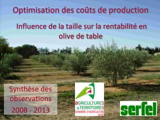 Optimisation des coûts de production Influence de la taille sur la rentabilité en olive de table