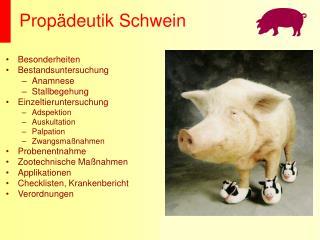 Propädeutik Schwein
