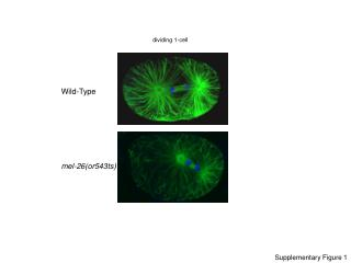 dividing 1-cell