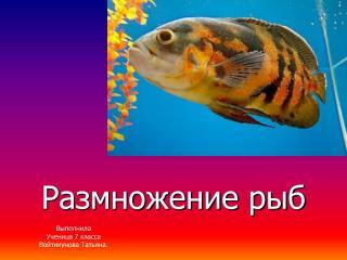Размножение рыб