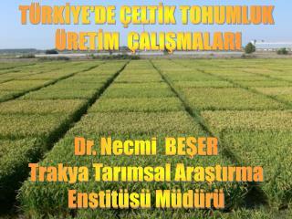 TÜRKİYE'DE ÇELTİK TOHUMLUK   ÜRETİM  ÇALIŞMALARI Dr. Necmi  BEŞER