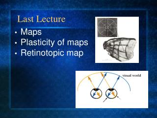 Maps Plasticity of maps Retinotopic map