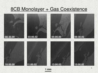 8CB Monolayer + Gas Coexistence