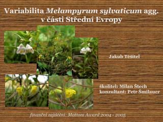 Variabilita  Melampyrum sylvaticum  agg. v ?�sti St?edn� Evropy