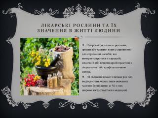 Лікарські рослини та  ї х значення в житті людини