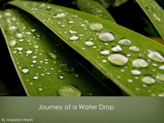 Journey of a Water Drop