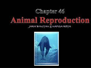 Chapter 46 Animal Reproduction Jara Bhuiyan  &  Nafisa Reya