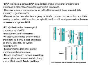 Při výměně se dva homologické chromozomy překříží.  Místo překřížení –  chiazma .