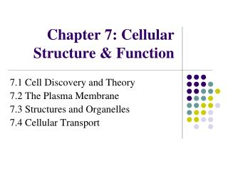 Chapter  7: Cellular Structure & Function