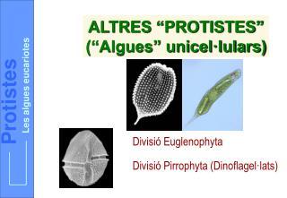 Les algues eucariotes
