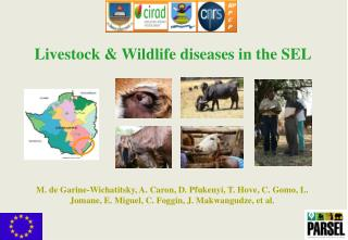 Livestock & Wildlife diseases in the SEL