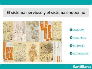 El sistema nervioso y el sistema endocrino