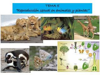 """TEMA 5 """"Reproducción sexual en animales y plantas"""""""