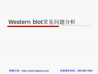 Western blot 常见问题分析