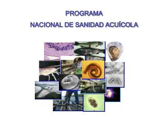 PROGRAMA  NACIONAL DE SANIDAD ACUÍCOLA