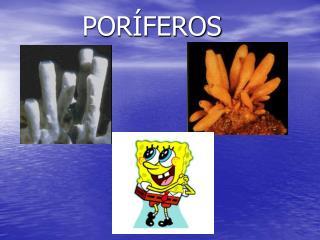 POR�FEROS