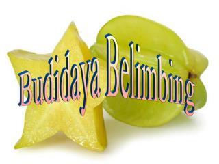 Budidaya Belimbing