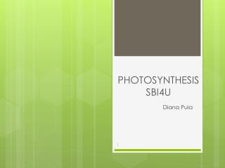 PHOTOSYNTHESIS SBI4U