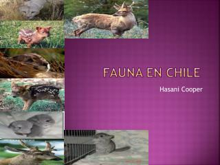 fauna  en Chile