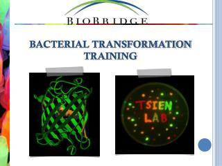 BACTERIAL TRANSFORMATION TRAINING