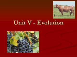 Unit V - Evolution