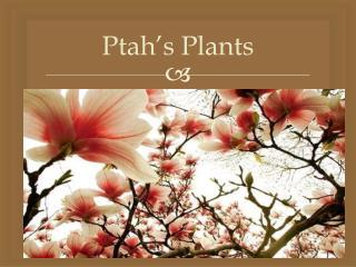 Ptah's Plants