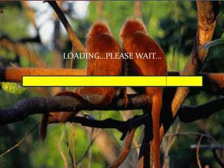 LOADING…PLEASE WAIT …