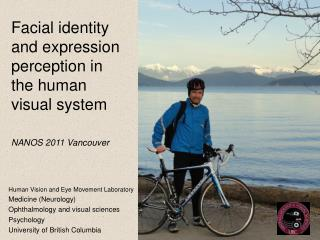 Facial identity and expression perception in the human visual system